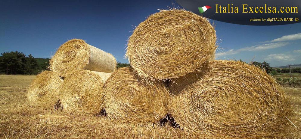 oxfam-balle-di-fieno-agricoltura