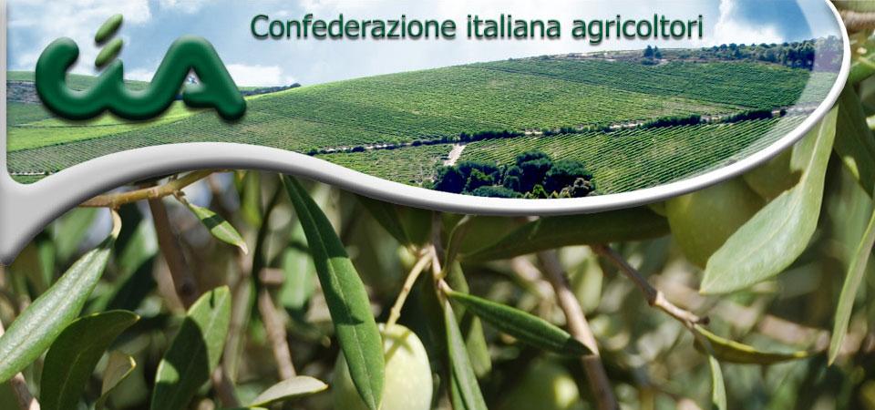 cia-cosenza-economia-olivicultura-olio-mazzei-confagricoltura