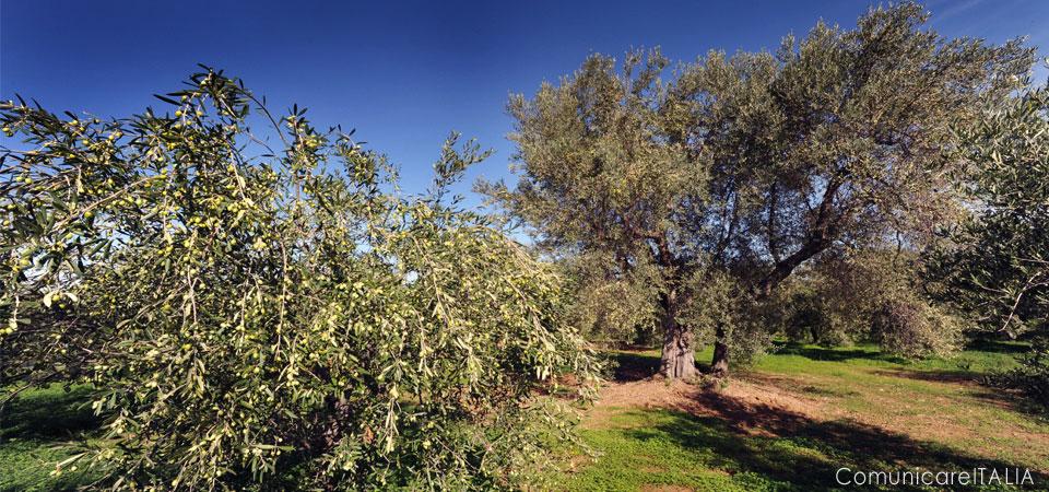dieta-mediterranea-unical-sostenibilita-ambientale